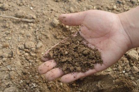 L'engrais hydroponique, voici les avantages