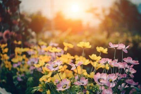 Votre paysagiste prend soin de la santé de votre jardin