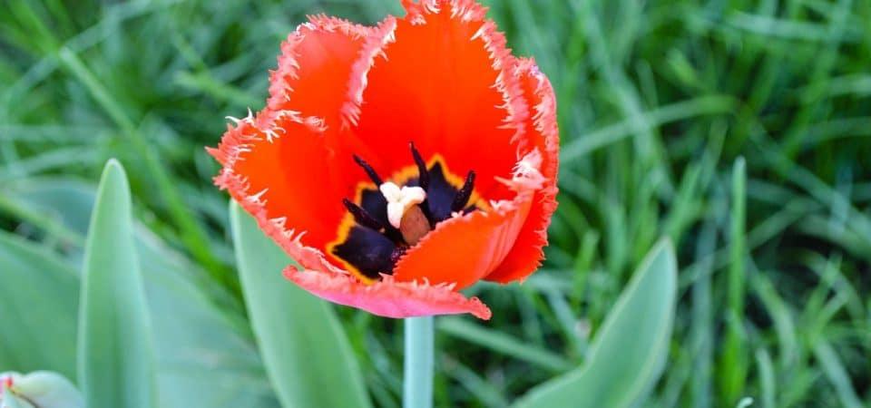 Créer un joli massif avec les conseils des horticulteurs