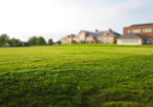 La meilleure façon de faire pousser votre pelouse rapidement