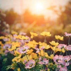 Comment entretenir son jardin?